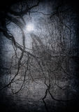 Image grunge de forêt foncée, fond de veille de la toussaint Photos stock