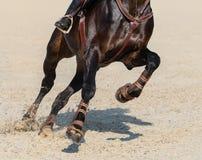 Image haute étroite des jambes du cheval courant de sport de baie photographie stock libre de droits