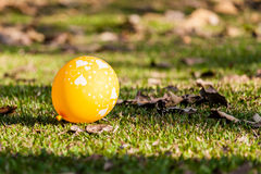 Image of hearts on the balloons on lawns. Image of hearts on the yellow balloon with sunshine on lawns at the park Stock Photography