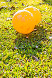 Image of hearts on the balloons on lawns. Image of hearts on the yellow balloons with sunshine on lawns at the park royalty free stock photos