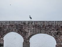 Image of a heron on a brick wall with arches in a river royalty free stock photo