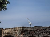Image of a heron on a brick wall with a blue sky background royalty free stock image