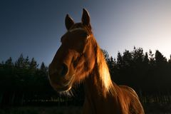 Silhouette image of a horse with side lighting royalty free stock photos