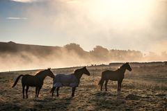 Horses standing on grass field with thick mist royalty free stock photography