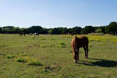 Image of horses in a field Stock Photography