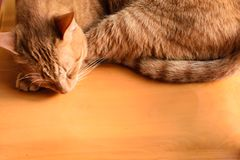 Common House Cat Sleeping for Title Page stock photos