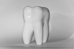 Image of human molar tooth on white background for texture and logo Royalty Free Stock Photos
