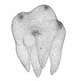 Image of the human tooth Stock Images