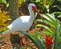 Tropical Bird. Image of an Ibus surrounded by tropical plants. The photo was taken in Orlando, Florida Royalty Free Stock Photography