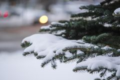 Image of a winter pinetree. The image of an Image of a winter pinetree stock photography