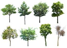 This image is isolated of dead trees on the white background. royalty free stock photos