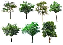 This image is isolated of trees on the white background. stock images