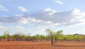 Kalahari Royalty Free Stock Images