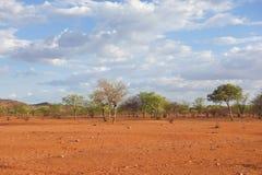 Kalahari. Image of Kalahari landscape in Africa Stock Image