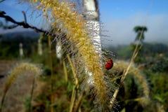 Ladybird beetle on tiny water dropletsMacro shot royalty free stock photos