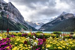 Flowers and Lake Louise stock photo