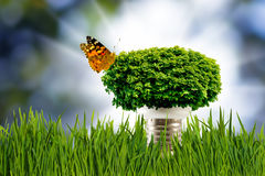 Image lamp, crown of the tree and butterfly. Stock Images