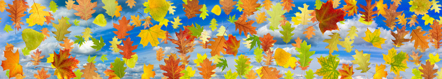 Image of leaves against the sky Royalty Free Stock Photography