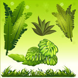 Image of leaves and grass jungle.  royalty free illustration
