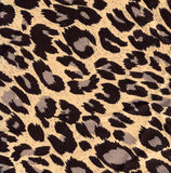 Image leopard fur as background Stock Image