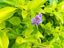 Beautiful light purple flowers Royalty Free Stock Photography