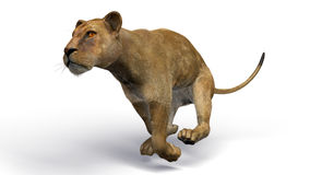 The image of a lioness Stock Image