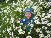 Beautiful child in the flower-bed of camomiles Royalty Free Stock Image