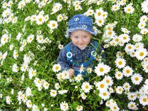 Beautiful child in the flower-bed of camomiles Stock Image