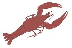 Image of lobster animal Stock Photography
