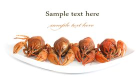 Image of lobsters. On plate close up isolated on white Stock Image