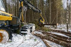 Image of logger cut down trees in winter forest Royalty Free Stock Photo