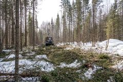 Image of logger rides through forest after felling Stock Images