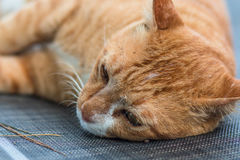 Image of lonely cat lying and looking down resting on a sun loun royalty free stock images