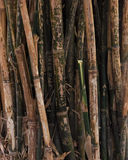 Bamboo branches Stock Photo