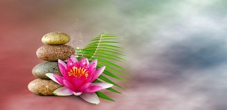 Image of lotus flower and stones close-up. Image of lotus flower and stones closeup stock image