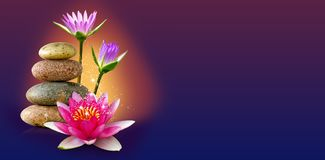 Image of lotus flower and stones closeup. Image of lotus flower and stones close-up stock images