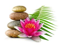Image of lotus flower and stones. Isolated image of lotus flower and stones stock illustration