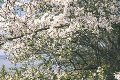 Image of lush early spring foliage - vibrant green spring fresh royalty free stock photo