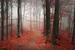 Beautiful forest during autumn Stock Photo