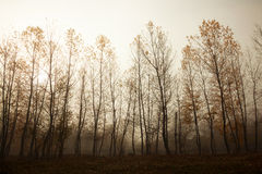 Trees during autumn Stock Images