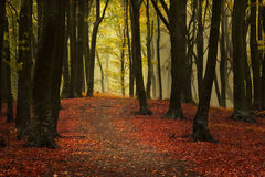 Beautiful forest during autumn Royalty Free Stock Photos