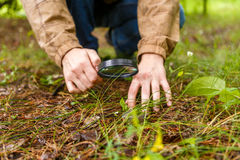 Image of male biologist with magnifying glass. Studying plants in forest Stock Image