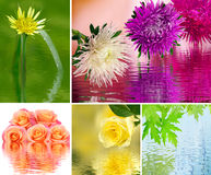 Image of many flower over the water close up Royalty Free Stock Photos