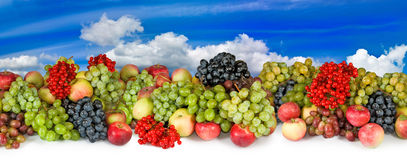 Image many fruits and berries in the garden close up Royalty Free Stock Photography