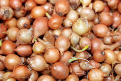 Onion seeds Stock Image