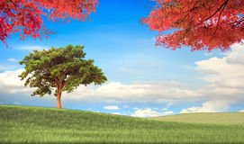 Image of the maple with beautiful landscape Royalty Free Stock Photo