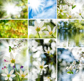 Image of mix of flowers in the garden close-up Royalty Free Stock Photo