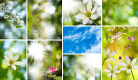Image of mix of flowers in the garden close-up Royalty Free Stock Image