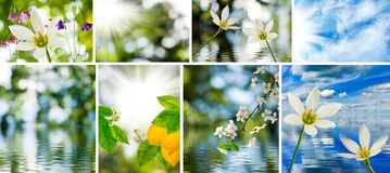 Image of mix of flowers in the garden close-up Stock Photography