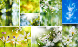 Image of mix of flowers in the garden close-up Stock Photos